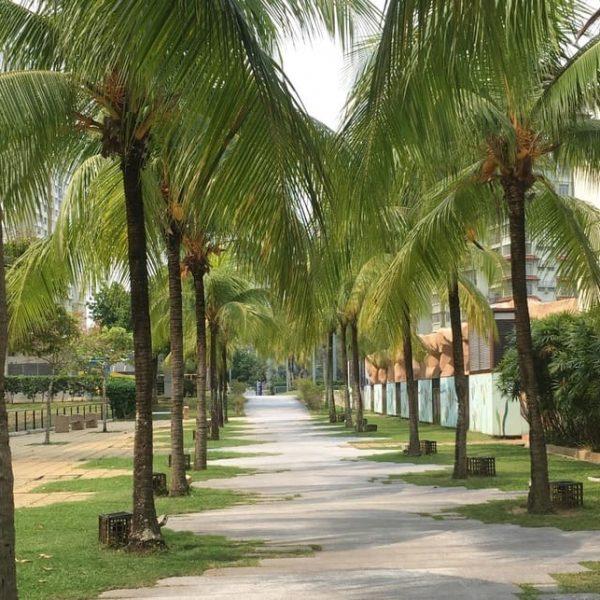 Palmen Malaysien