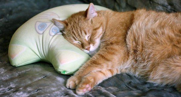 Katzenpolster