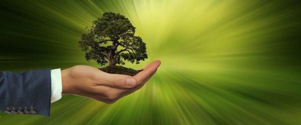 Auswahl Nachhaltige Geschaeftspolitik gegeben?